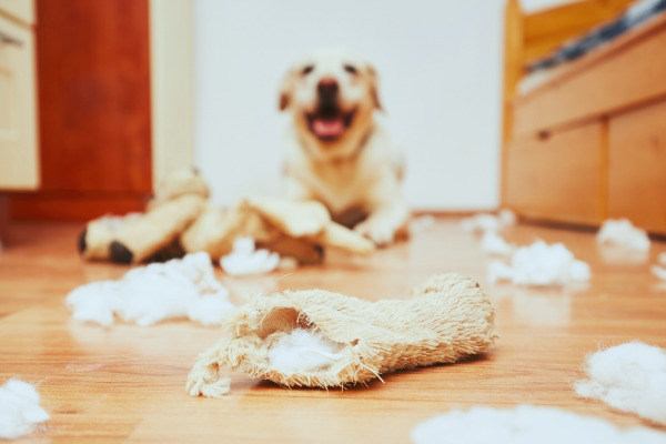 Dog Destruction